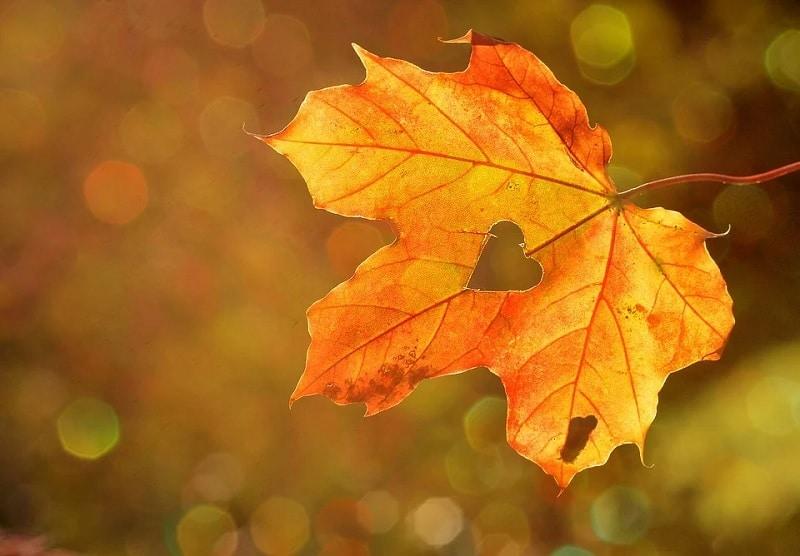Ideas y juegos otoño